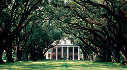 Oak Alley Plantation - New Louisiana
